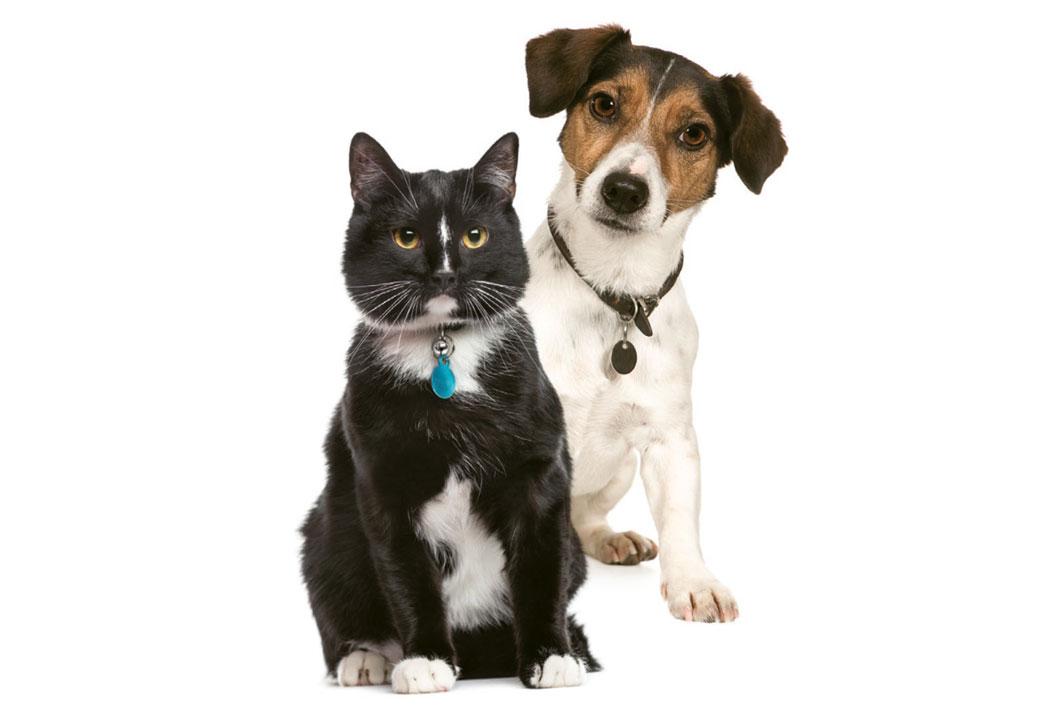 Un chat et un chien.