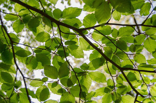 Des feuilles d'arbre.
