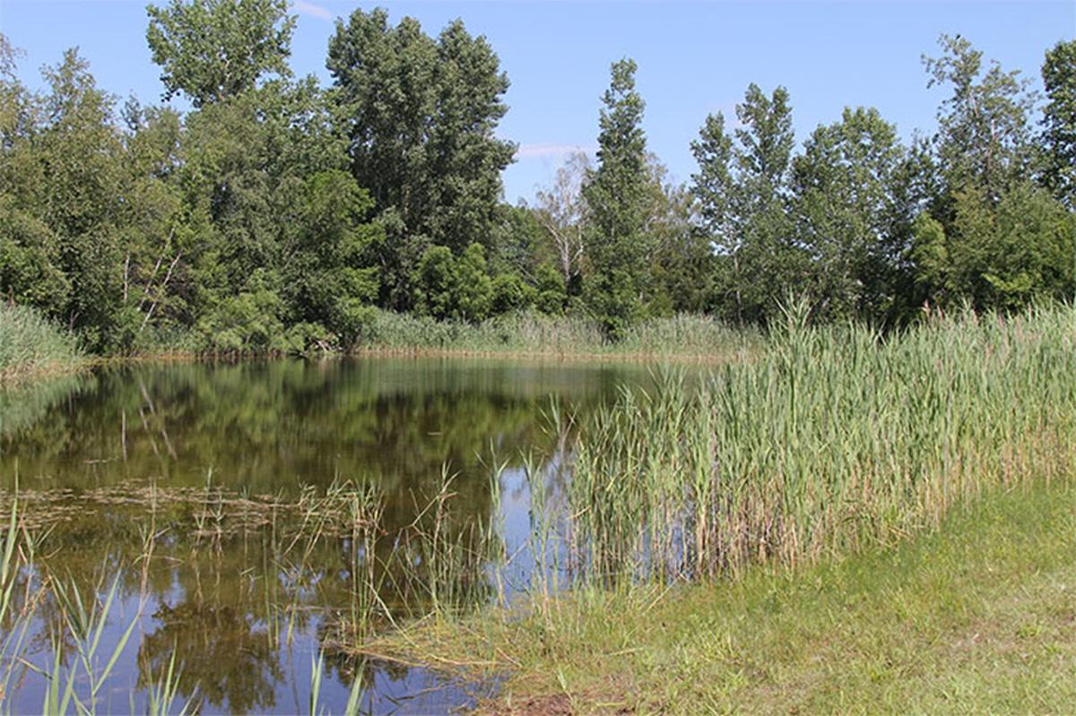 Le lac du parc des Parulines.