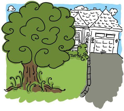 Illustration d'un arbre devant une résidence.