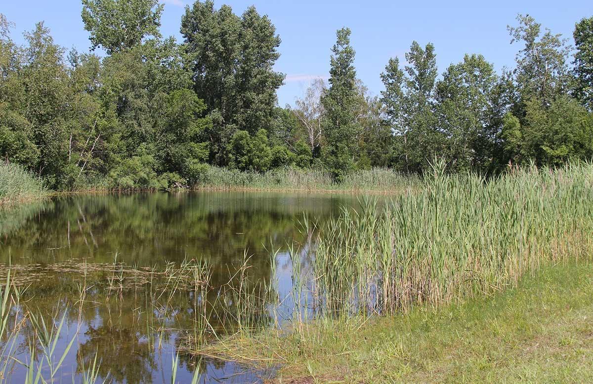 L'Étang du parc des Parulines.